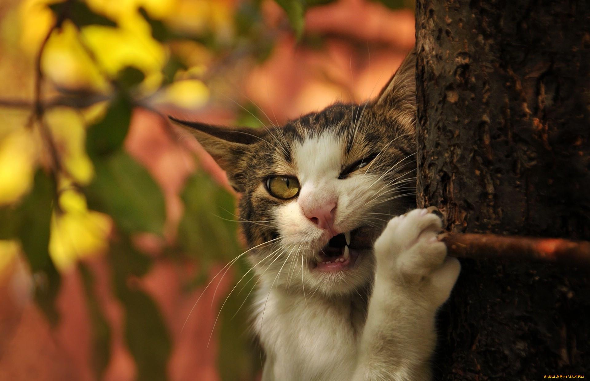 забавные животные фото кошки ищете медведь боксер